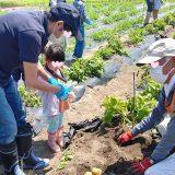 7/17 畑に行こう!~ジャガイモの収穫を行いました~